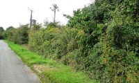 Hedge Cutting And Nesting Birds