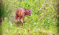 Conservation gets cute with bumper year for babies